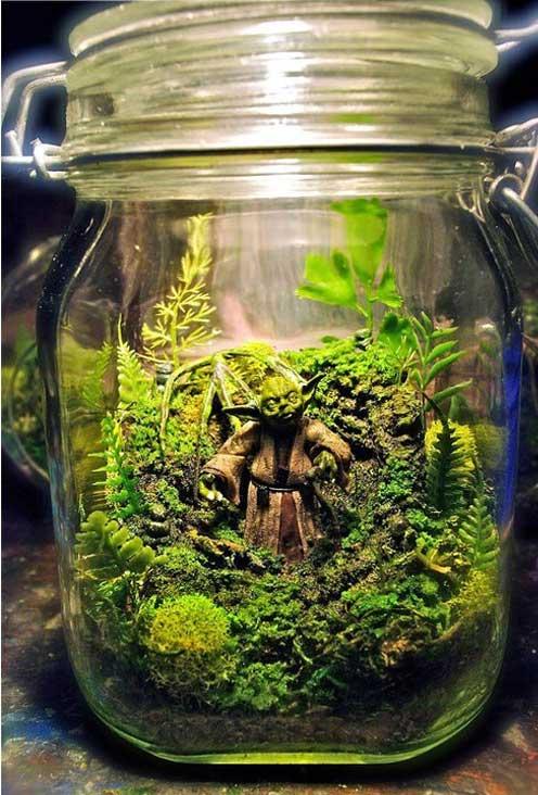 yoda-in-glazen-pot